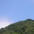 里山の上空に舞うノスリ
