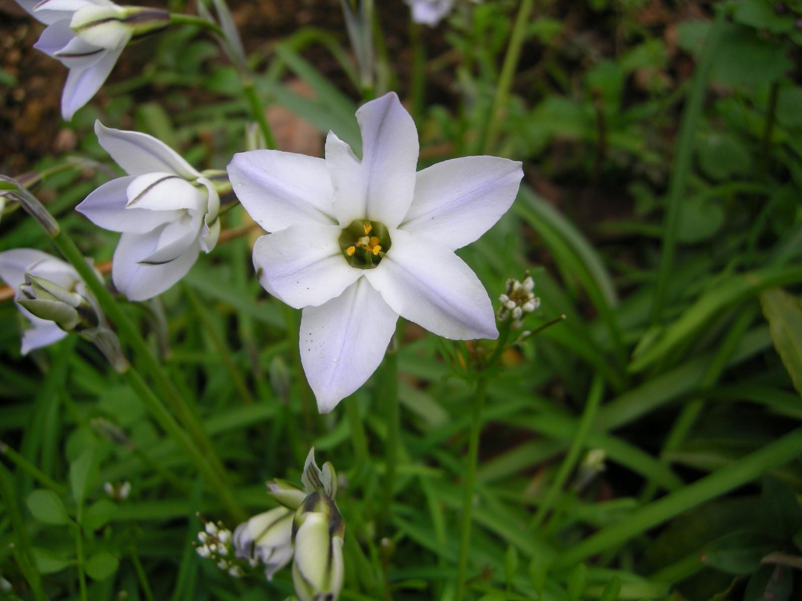 春めく庭の花たち: 丹沢山ろく夢...